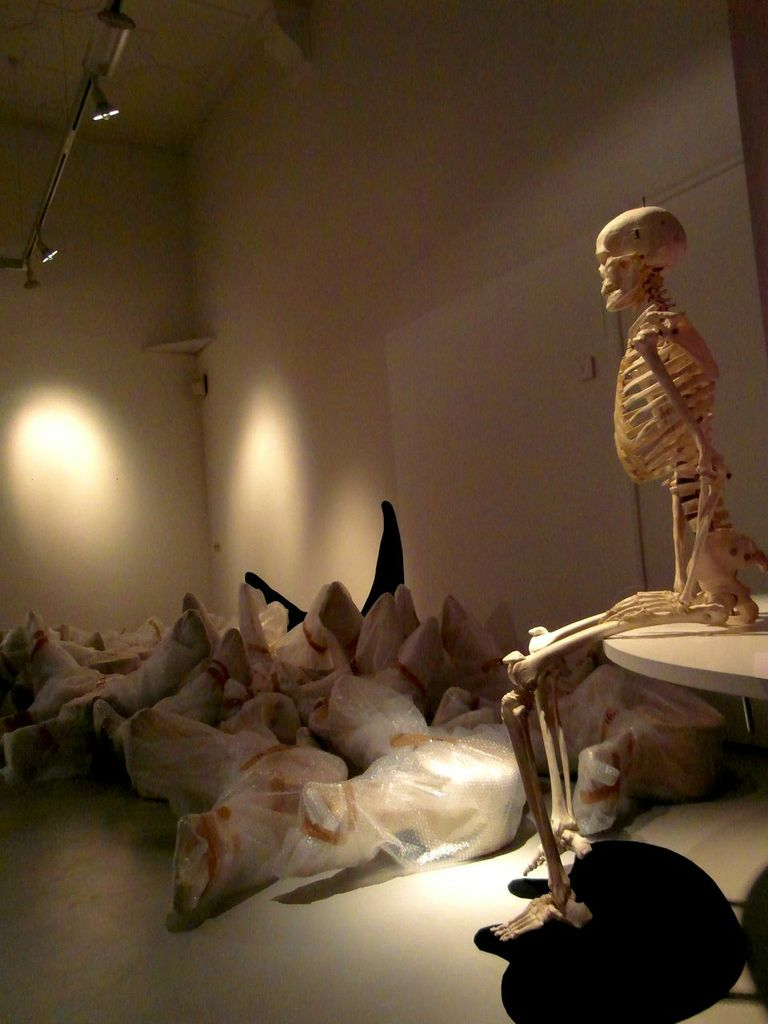 The bones after being packed up following the conclusion of the 'Stranded' exhibit.