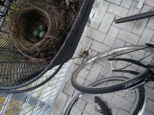 vogelnest 2