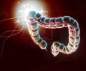 thumb-intestine