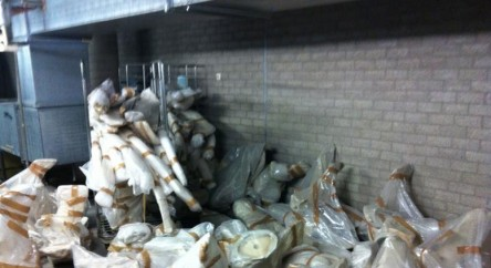 The bones in the bike storage at the Biology Centre.