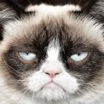 thumb-grumpycat