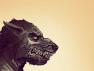 thumb-weerwolf