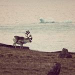 thumb-spitsbergen
