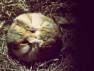 thumb-hamsters