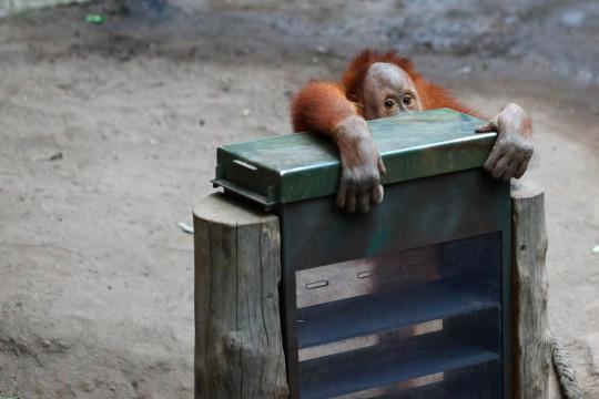 20160321 - roosblog - aap - leipzig zoo