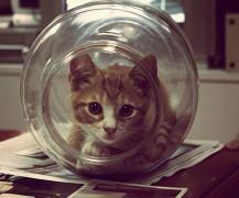 thumb-catbowl